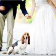 matrimonio e fido